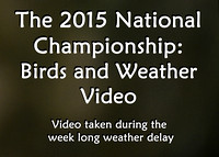 Birds & Weather Videos